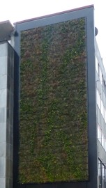 "Projekt ""Green Wall Essen"""