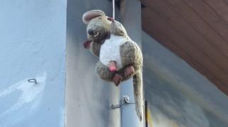 Installation; Rolly Rat